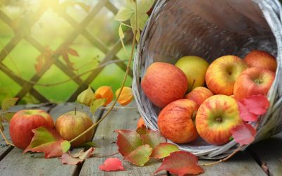 Come lavorare meglio curando l'alimentazione – i consigli del dott. Loreto Nemi